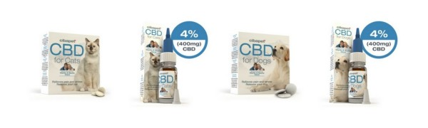 cbd chien chat animal
